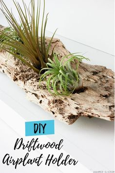 A driftwood airplant holder is a creative way to use driftwood from the beach and display airplants in your home! An easy DIY - you only need a drill and 5 minutes time. #diy #houseplant #homedecor