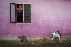 A Milano i colori dell'India di Alex Webb - TheMammoth'sReflex
