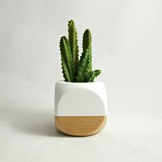 WHITE + WOOD SUCCULENT PLANTER available to purchase in the decor8 shop!
