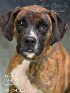 URGENT: Meet Flora. Dogs for adoption,euthanization,rescue,sponsor