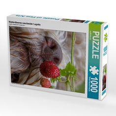 Yum, Coco loves to eat fresh strawberries in the woods, lukewarm from the plant. She will sit there smell, taste and indulge. She is a wise little girl.  #lagottoromagnolo #strawberry #puzzle #nature #wuffclickpic #wemakedogsgofruity