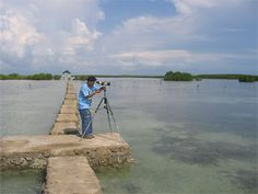 Olango Island Wetlands and Nature Reserve, home to the largest concentration of migratory birds found in the Philippines.