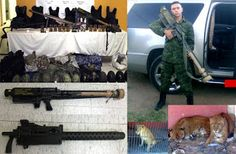 Lions Tigers Weapons and Cars Seized from La Linea Cartel in Chihuahua