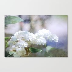 """Fine art print on bright white, fine poly-cotton blend, matte canvas using latest generation Epson archival inks. Individually trimmed and hand stretched museum wrap over 1-1/2"""" deep wood stretcher bars. Includes wall hanging hardware. #nature's #umbrellas, #white, #flowers"""