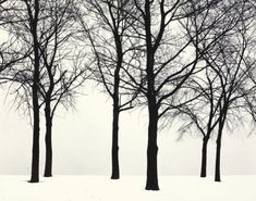 Harry Callahan :: Chicago (Trees in snow), 1950