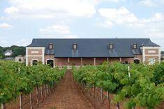 delaney vineyards grapevine | Delaney Vineyards