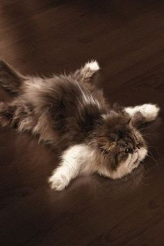 Kitty floor polisher...:)