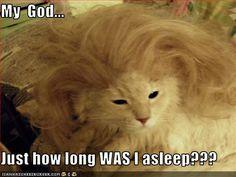 More cat humor