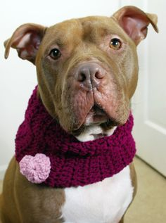 Dog Cowl Purple with Pink Heart Crochet from Etsy. Aww