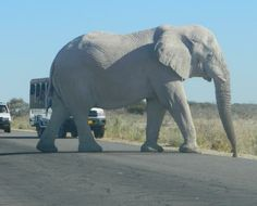 Right of Way Just outside Okaukuejo gate on the way to Etosha Game Lodge and Camp