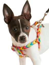 Jonathan Adler Pet Accessories! Nothing wrong with having a stylish pet...find these at bevello