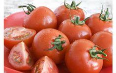 Skydda tomaterna