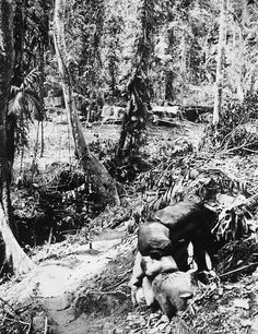 The gun emplacement in foreground protects the camp area in the jungles of Guadalcanal. Mosquitoes, flies and rain made living conditions very disagreeable. This coupled with the threat of a Jap attack at any time, caused Marines much discomfort during their seige at the island. March 1,1 943