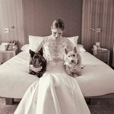 a proper wedding Wedding Photography Poses, Wedding Poses, Wedding Bride, Wedding Ideas, Terrier Dogs, Cairn Terriers, West Highland White, Westies, Little Dogs