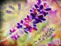lavender-dreams-martin-mcdonnell.jpg (466×350)