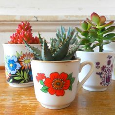 Succulents in vintage cups by Hipaholic | Project | Home Decor / Accessories | Decorative | Kollabora