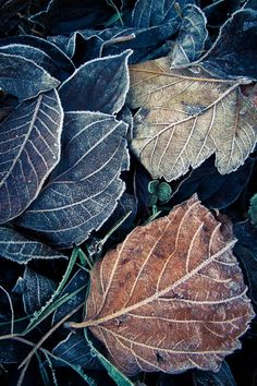Otoño somewhatvintage: (via Pin by Magic Elf on Color Themes Color Themes, Textures Patterns, Shades Of Blue, Autumn Leaves, Fallen Leaves, Blue Leaves, Color Inspiration, Mother Nature, Cool Pictures