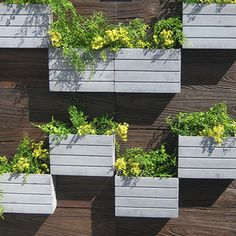 wall planters - Google Search
