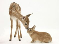 It's like Bambi and Thumper
