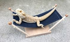 Wooden Hammock with fabric sling for Bearded Dragon or other pet or Reptile Cactus, Dinosaur, Game of Thrones, Pokemon lizard gecko Excited to share this item from my shop: Reptile Hammock for Bearded Dragon, Gecko or other small pet Fancy Bearded Dragon, Bearded Dragon Cage, Bearded Dragon Habitat, Leopard Gecko Cute, Leopard Gecko Habitat, Superman, Batman, Bartagamen Terrarium, Bearded Dragon Enclosure