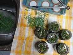 Pickled Sea Asparagus Sea Asparagus, Fermented Foods, Meatless Monday, Bushcraft, Vegan Vegetarian, Pickles, Spinach, Vegan Recipes, Fishing