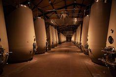 Walla Walla Wineries, Grand Duc, Study Architecture, Falls Church, Cellar, Interior Lighting, Chai, Tequila, Whisky