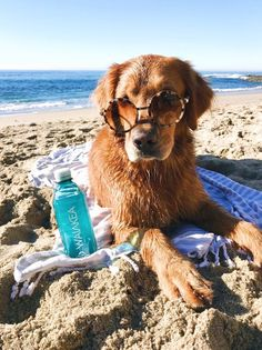 DOG BEACH ESSENTIALS- Everything You Need To Bring To The Beach With Your Dog!