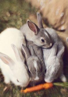 #ZBohom - Bunny 4-Pack