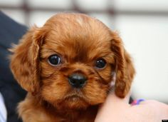 cavs made the list of puppies you need more than a man!