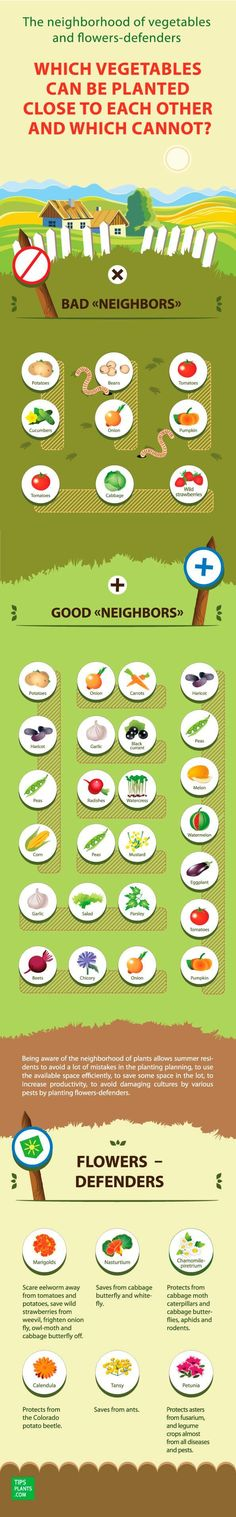 Use these AWESOME infographics to grow the best tasting vegetables ever! Got to pin these for later.