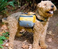 10+ Tips for Hiking and Backpacking With Your Dog.