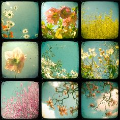 so beautiful....retro images of flowers
