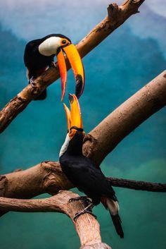 ♂ Wildlife photography Birds