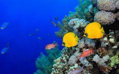 Tapety krásné ryby, mořské dno, tropické, zvířata, korálový útes ...