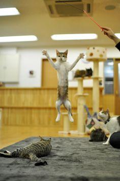 i'm jump'n....i'm jump'n.....
