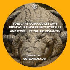 Crocodile-eyes