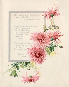 Pink chrysanthemums, border.  From Shakespeare book, c.1909.