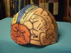 """Brain Hemisphere Hat (made of paper). I'm sure kids wouldn't """"mind"""" learning about the brain this way. Kid Science, Science Classroom, Science Lessons, Teaching Science, Science Education, Science Activities, Science Projects, Elderly Activities, Dementia Activities"""