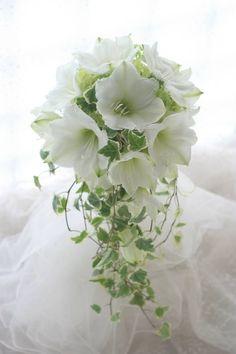 本日に、赤坂日枝神社の結婚式場にお届けした、アマリリスのブーケ。白の白さが痛いほど美しいアマリリスの品種名はクリスマスギフト、といいます。数年前に、一会の...