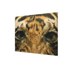 >>>best recommended          Tiger eyes gallery wrap canvas           Tiger eyes gallery wrap canvas we are given they also recommend where is the best to buyShopping          Tiger eyes gallery wrap canvas Review from Associated Store with this Deal...Cleck Hot Deals >>> http://www.zazzle.com/tiger_eyes_gallery_wrap_canvas-192016349140377545?rf=238627982471231924&zbar=1&tc=terrest