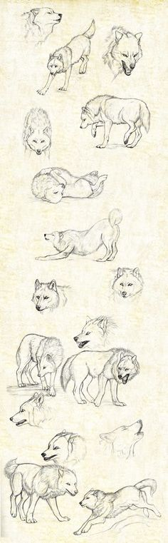 sketches_wolfs_by_anisis.jpg (1085×3503)