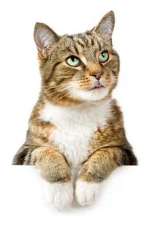 Caring for your cat is generally not hard as cats are pretty low ... #caringforcat - See more at Catsincare.com!