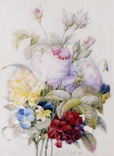 Цветочная литография | Pierre-Joseph Redoute (3). Обсуждение на LiveInternet - Российский Сервис Онлайн-Дневников