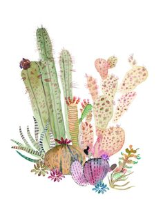 Cacti Illustration - Mijilee.com