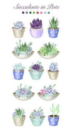 22 watercolor illustrations of succulents pots, hand-painted in watercolors. Includes succulents pots in beautiful shades of green and purple. Succulents Drawing, Watercolor Succulents, Watercolor Flowers, Watercolor Art, Succulents Art, Succulents Wallpaper, Indoor Succulents, Propagating Succulents, Planting Succulents
