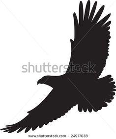 Great hawk