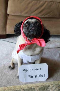 pugs-are-awesome