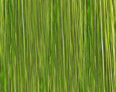 limegreen_jpg+.jpg (750×600)