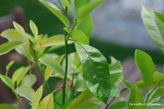 Comment obtenir de beaux Citronniers en gardant les pépins de Citrons Inside Garden, Green Garden, Green Plants, Green Flowers, Vegetable Garden, Gardening For Beginners, Gardening Tips, Outdoor Shelters, Tips & Tricks