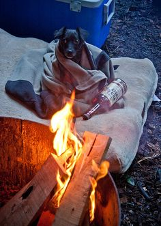 camping and puppy dogs Camping Glamping, Camping And Hiking, Camping Life, Camping Gear, Outdoor Life, Outdoor Fun, Outdoor Camping, Trekking, Kayak